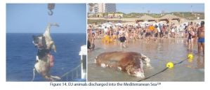 Figure 14. EU animals discharged into the Mediterranean Sea
