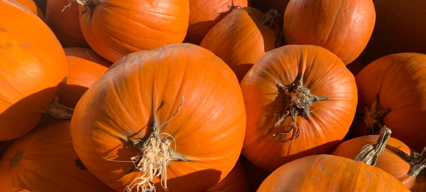 Canadians Split on Moving Every Halloween to Saturday