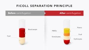 Ficoll Separation Principle
