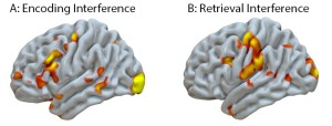 Figure 3 Both encoding and retrieval interference invoked increased activation in dorsal-lateral pre-frontal cortex, which has been associated with conflict control. However, retrieval interference was uniquely associated with posterior activations, which have been related to the integration of syntactic structures.