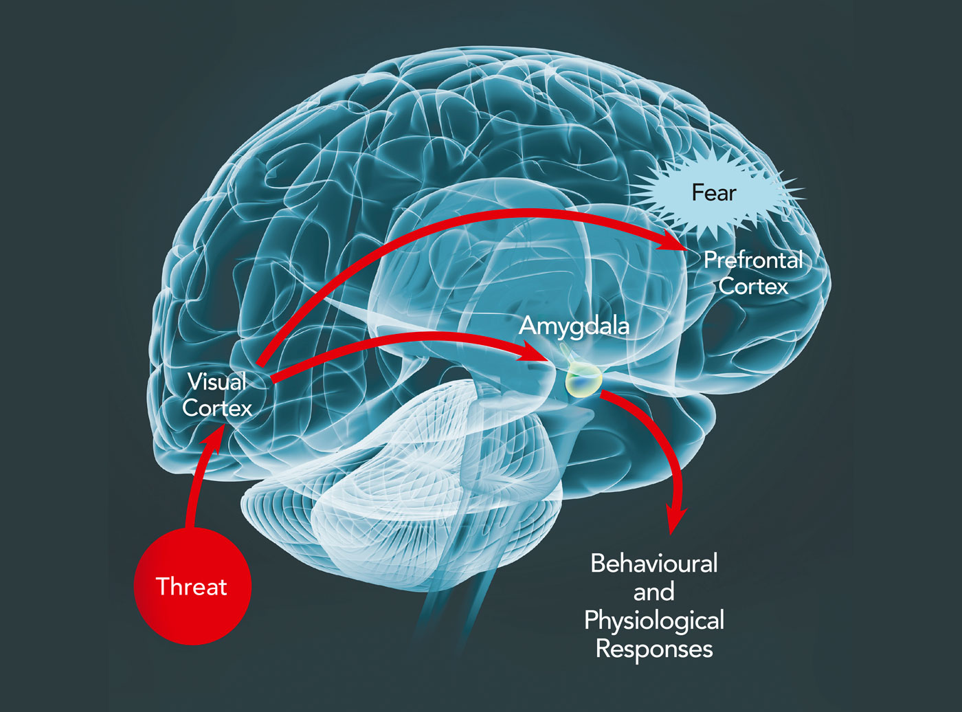 The Anxious Mind And Brain Challenging Current Approaches
