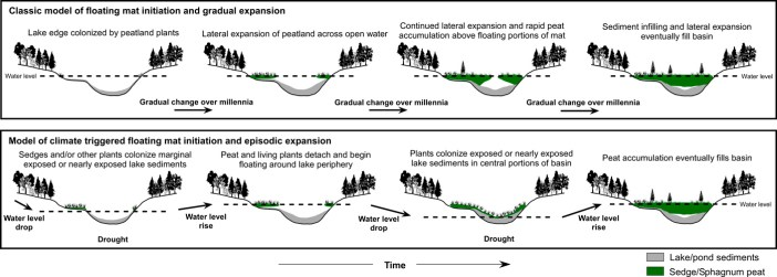 kettle peatland development
