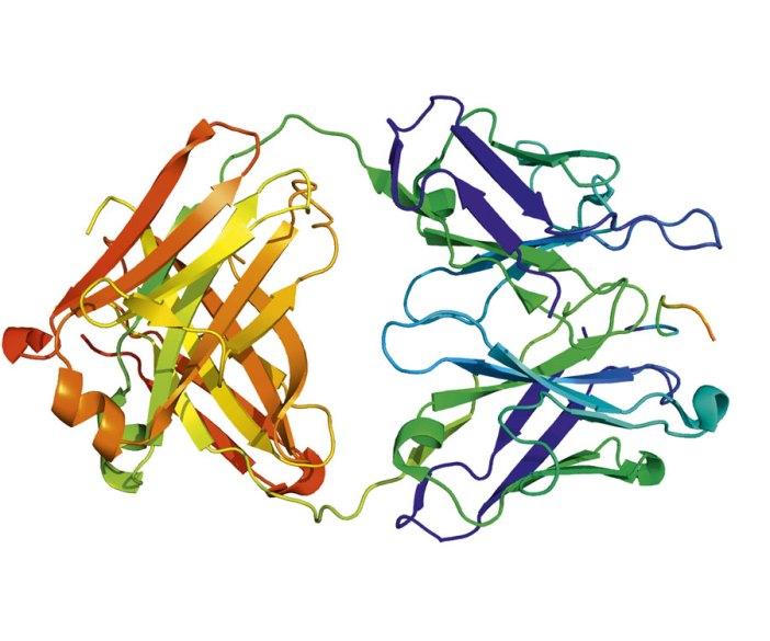 CAIX inhibitor