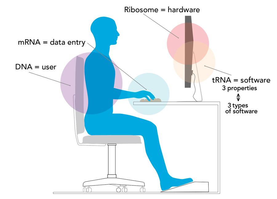 tRNA genomics