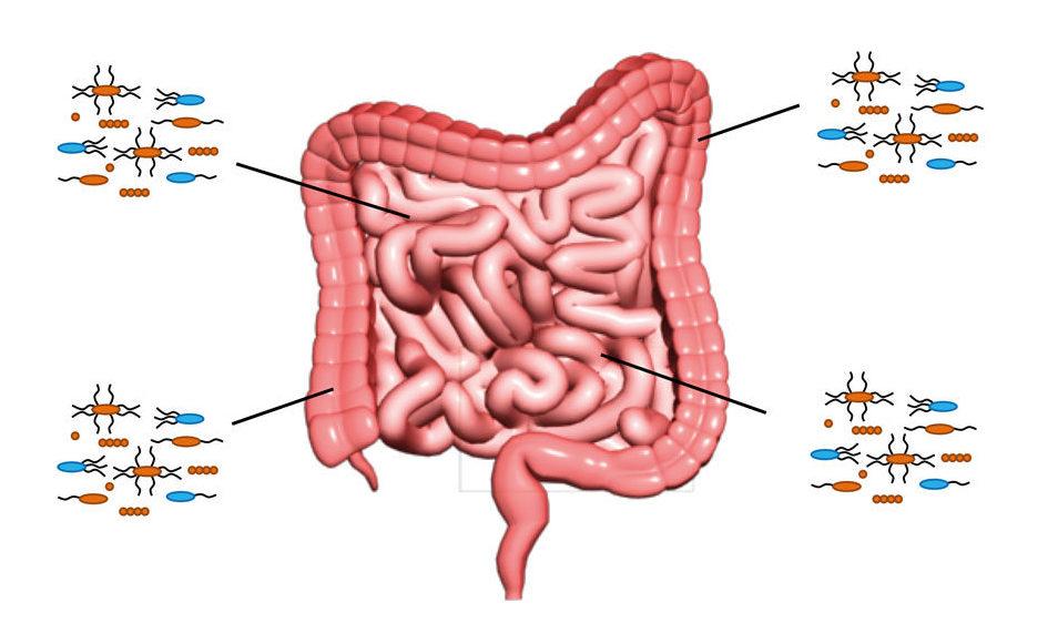 gut bacteria autoimmune disease
