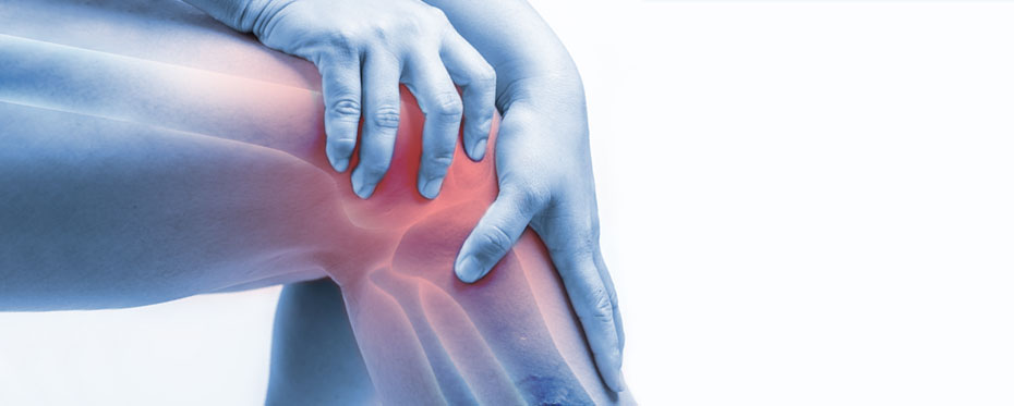 human joints marrow fat