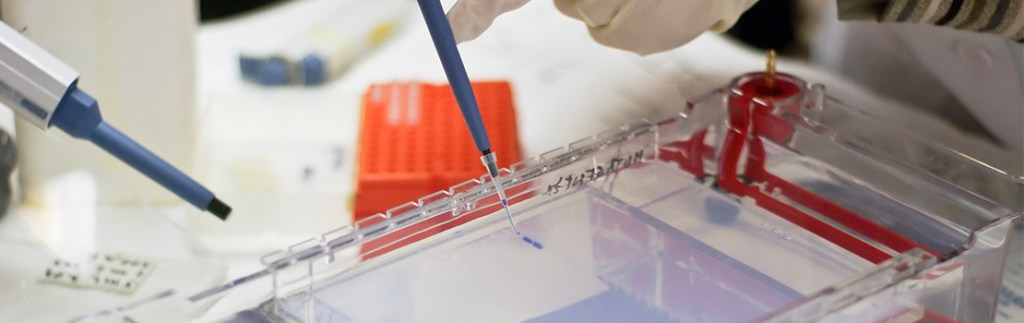 Gel electrophoresis can be applied to the study of proteomics.