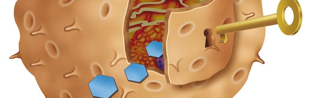 Exploring the underlying genetics of Type 1 diabetes