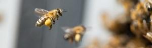 Bees swarm near a hive