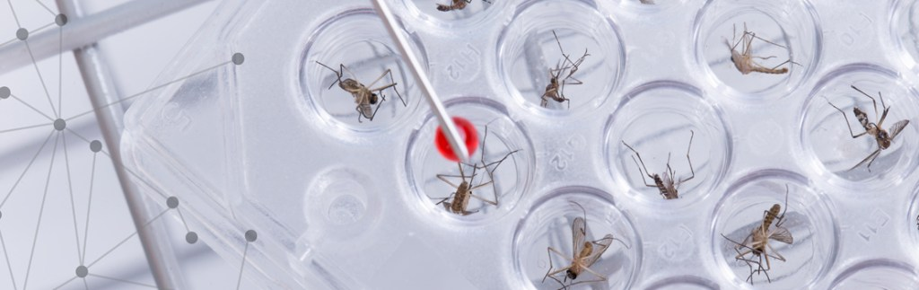 Mosquitoes arranged in trays for study