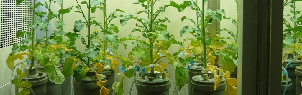 crop soil to be studied