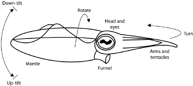 Diagram Of A Squid With The Areas And Dimensions Of