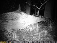 A cottontail probably should find a safe place at this time