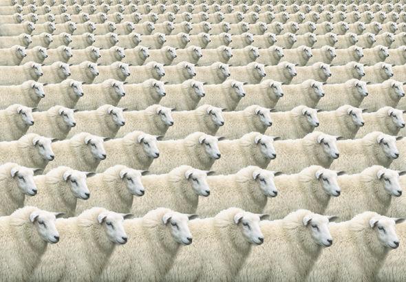 Les scientifiques vont produire en masse du bétail pour la viande