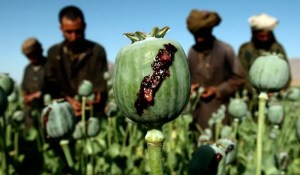 Un empire amoureux de son cimetière afghan
