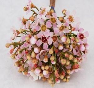 Waxflower Oki-Pink Resendiz Brothers