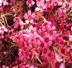 Tinted-Pink Resendiz Brothers