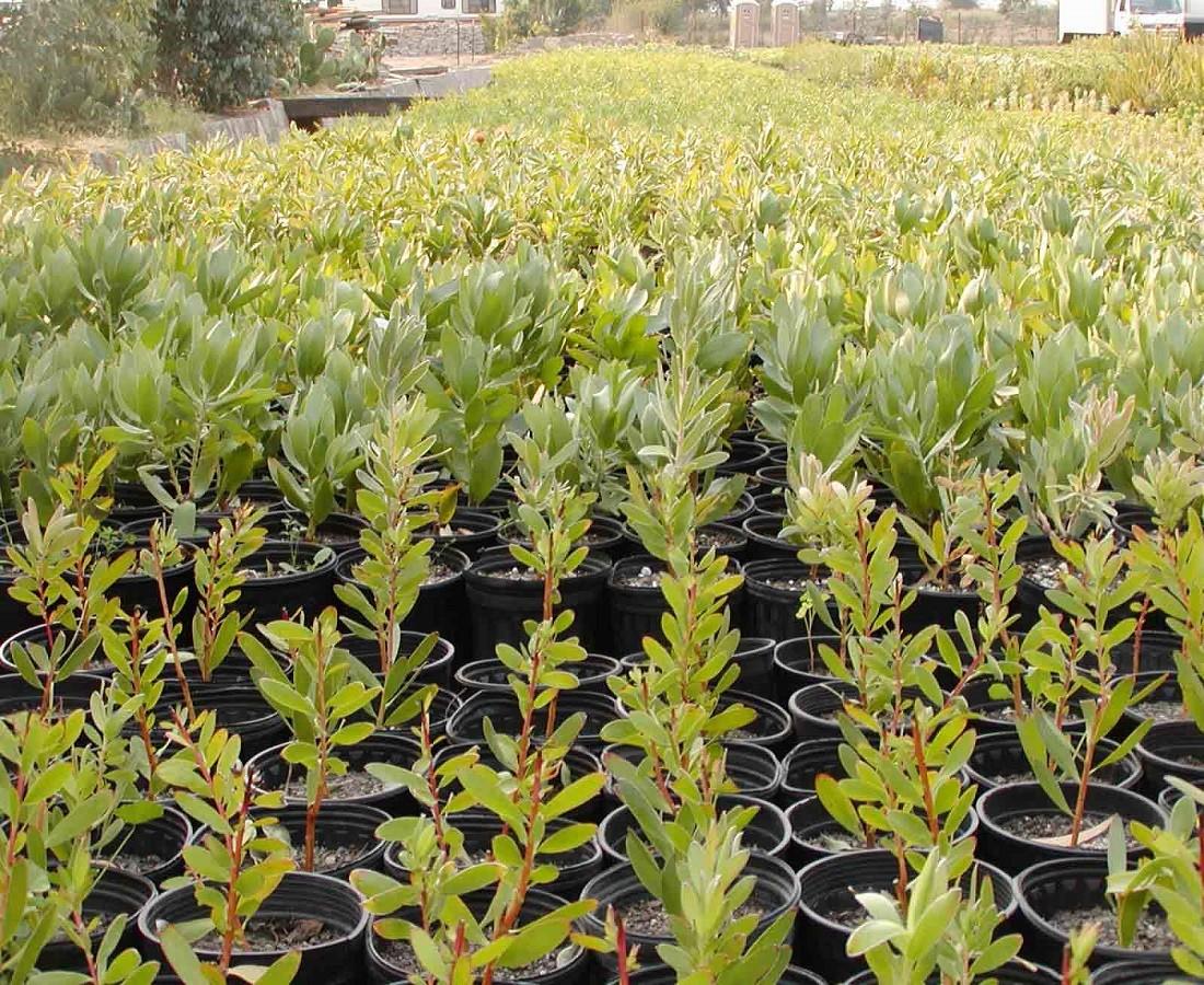 Plants Nursery Resendiz Brothers California