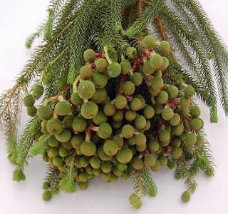Berzelia Galpinii Resendiz Brothers, California Flora