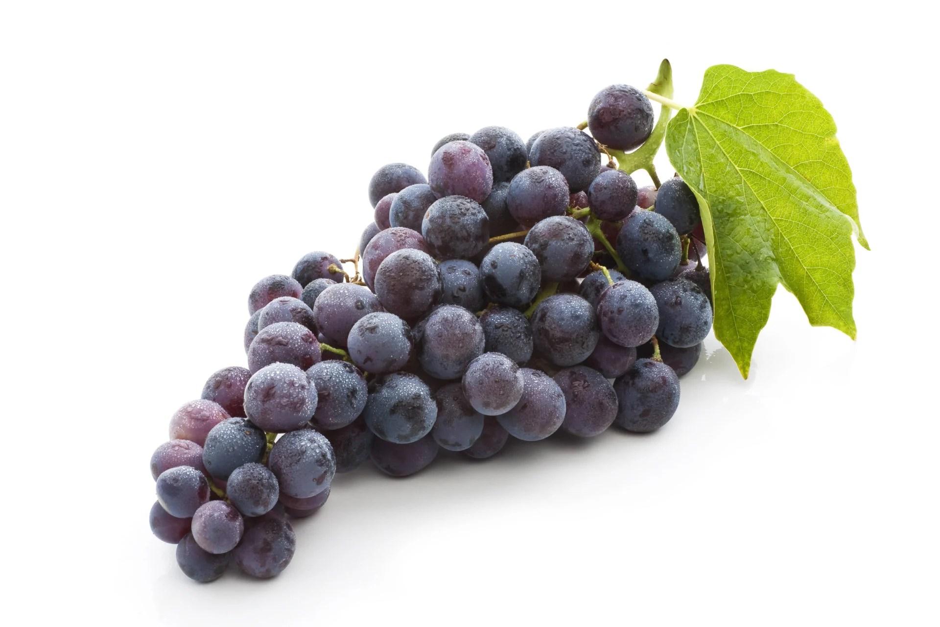 Image result for Anggur