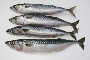ikan-mackerel
