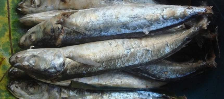 Aneka Jenis dan Tips Memilih Ikan Pindang yang Bebas Pengawet Berbahaya