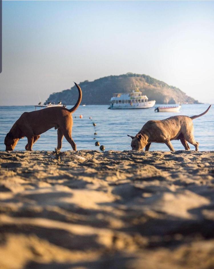 playa guayabitos