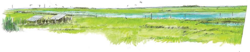 Le Marais au printemps. Quoi voir et quand ? Réserve naturelle régionale du Marais de la Vacherie