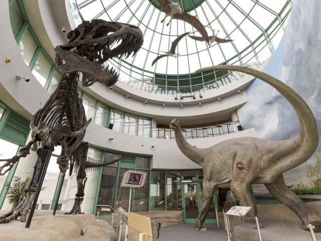 North Carolina Museum of Natural Sciences Raleigh NC