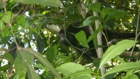 Monkey clip 2