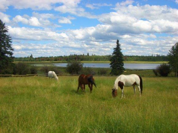 Horses Chrome Heart