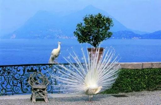 111-jardins-italiens_Page_3_Image_0004