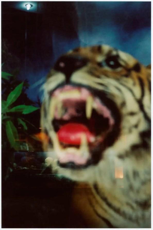 Le-tigre,-Beijing,-Chine,-2005-s+®rie-R+¬ve-d'Orient-par-Fran+ºois-Fontaine
