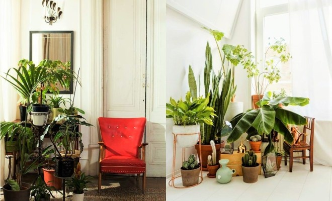 Living Room With House Plants