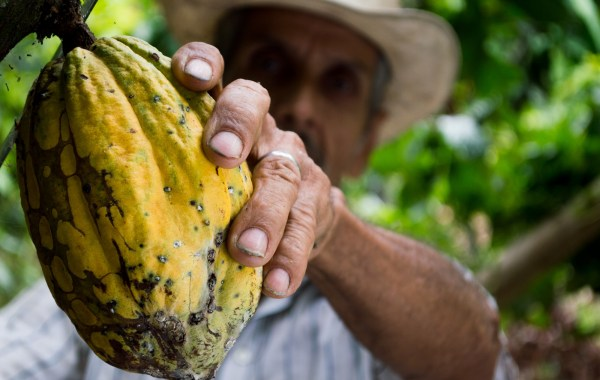 From bean to bar: the challenges on the cocoa industry