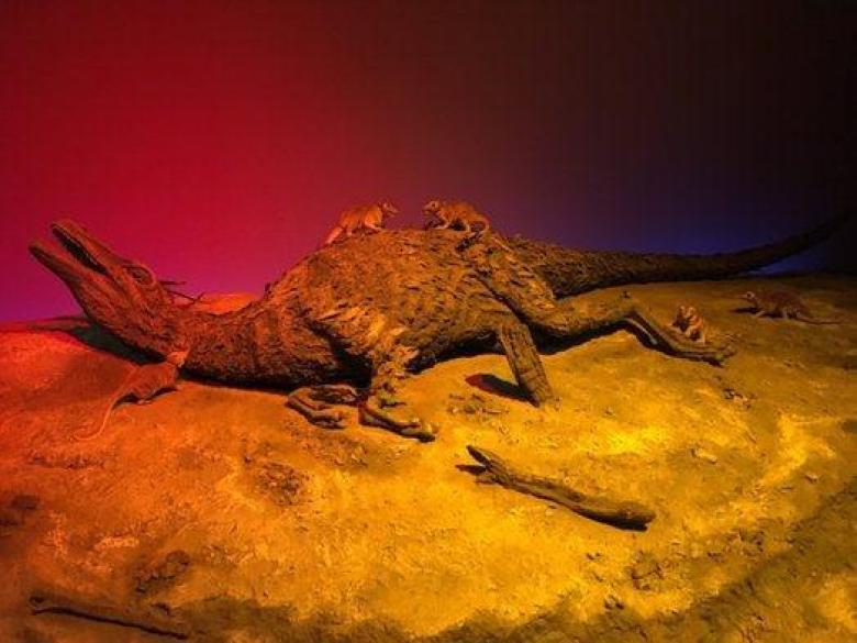 A fried dinosaur in the wake of mass extinction at the San Diego Natural History Museum