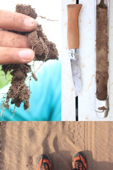 Build soil fertility with CC, rotation, perennial crop in sandy soils. Bottom foto : track at 2 meters of the field. Construire la fertilité du sol avec des couverts végétaux, des rotations, l'intégration de luzernes paturées tout cela en SD dans des sols très sableux. Résultats impressionnant garanti. La photo du bas, c'est la piste à deux mètres des échantillons de sols. C'est une plage...La Pampa, Argentina