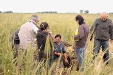 Soil tillage : only to see how your cover crop grow. Le travail du sol : seulement pour voir comment ton couvert se développe.