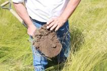 South of La Pampa. Native pasture for decades. No weeds, ever green, perfect soil structure, drought tolerant and more! Prairie naturelle, dans le sud de la pampa, pas d'adventices, toujours vert, structure du sol parfaite, résistant aux sécheresse etc...