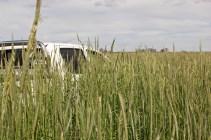 Lost in the cereal rye cover crop (More than 10TDM/ha). Perdu dans un couvert de seigle. Plus de 10 TMS/ha. La pampa, Argentina