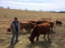 Denis Mc Donald - Pâturage tournant depuis plus de 30 ans. L'éleveur a sélectionner depuis de nombreuses années des vaches adaptées à sa gestion au pâturage. Il souhaite avoir des vaches de 450-500kg avec un petit gabarit. https://resilientagriculture.wordpress.com/2017/03/20/dennis-et-becky-mc-donald-paturage-tournant-depuis-plus-de-30-ans/