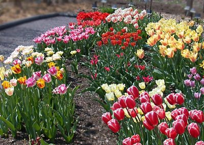 spring03-058