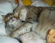 Uyuyan Güzeller
