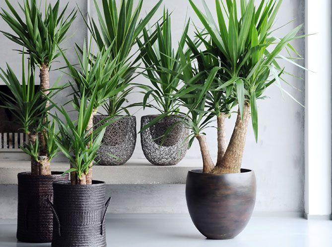 lecon de deco quelle plante pour mon bureau image 2
