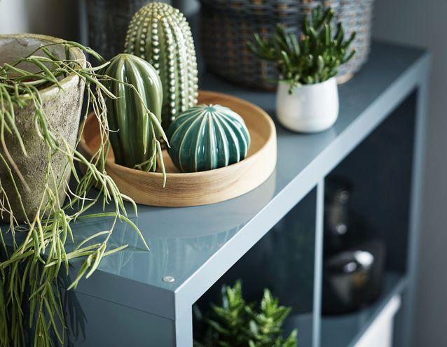 on offre quoi a un amoureux des plantes