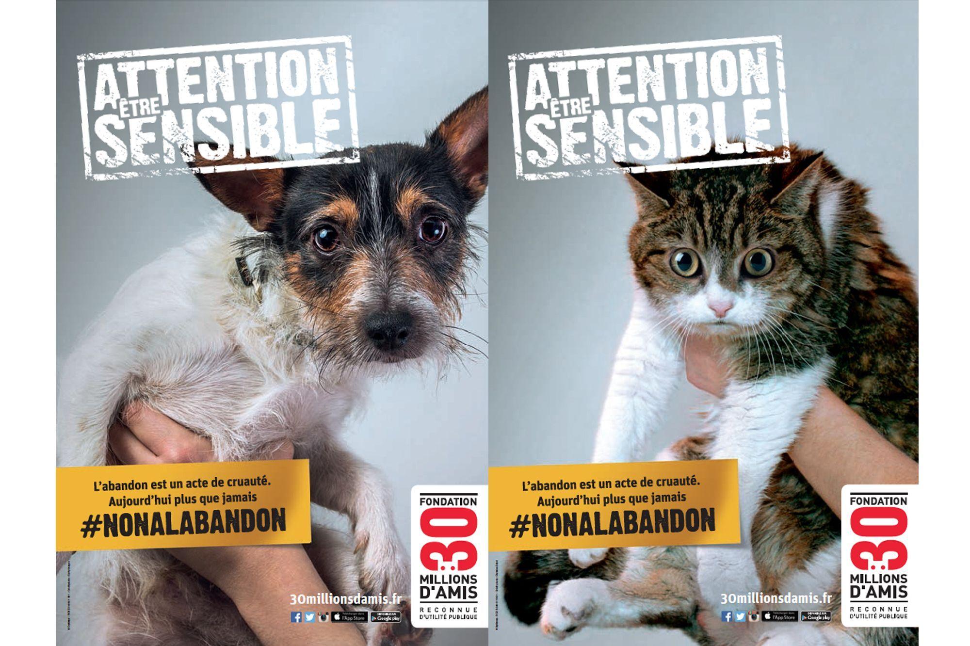 """Résultat de recherche d'images pour """"abandon animaux"""""""