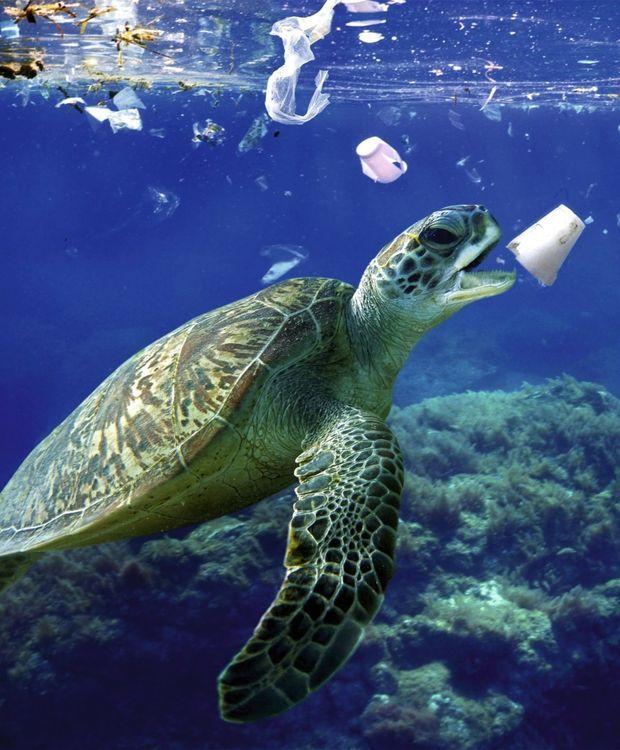 La pollution des océans par les déchets plastiques est une catastrophe pour ces animaux.