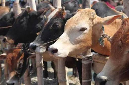 Madhya Pradesh: Man lynched for alleged cow slaughter; four
