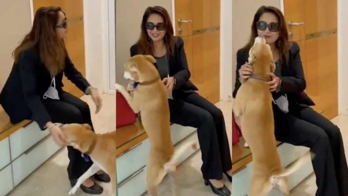 Madhuri Dixit's pawdorable video playing with her doggo is the best thing on internet today | WATCH