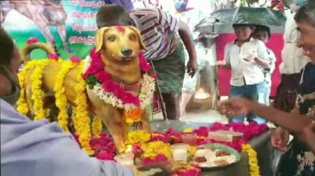 इंडिया टीवी - डॉग, आंध्र प्रदेश